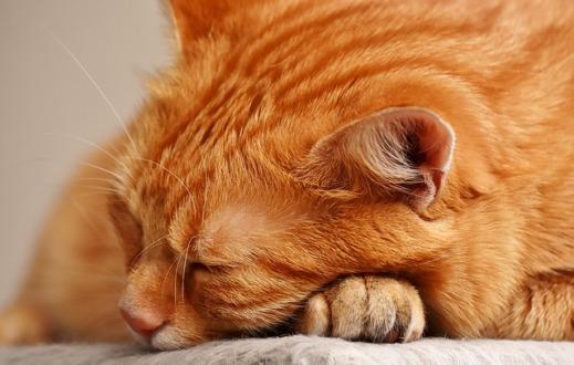cat-3080966_640